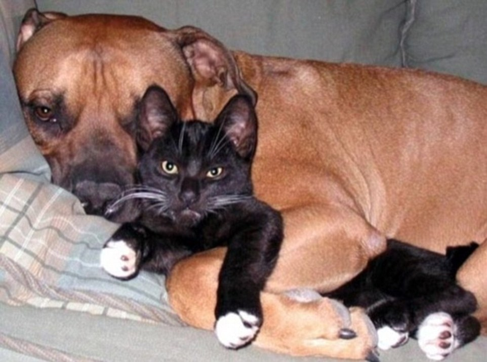 A dog lovingly embraces a disgusted-looking cat