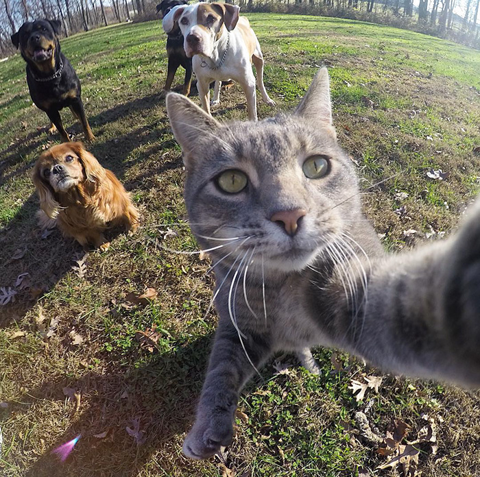 Selfie showing Manny the cat with several dog friends